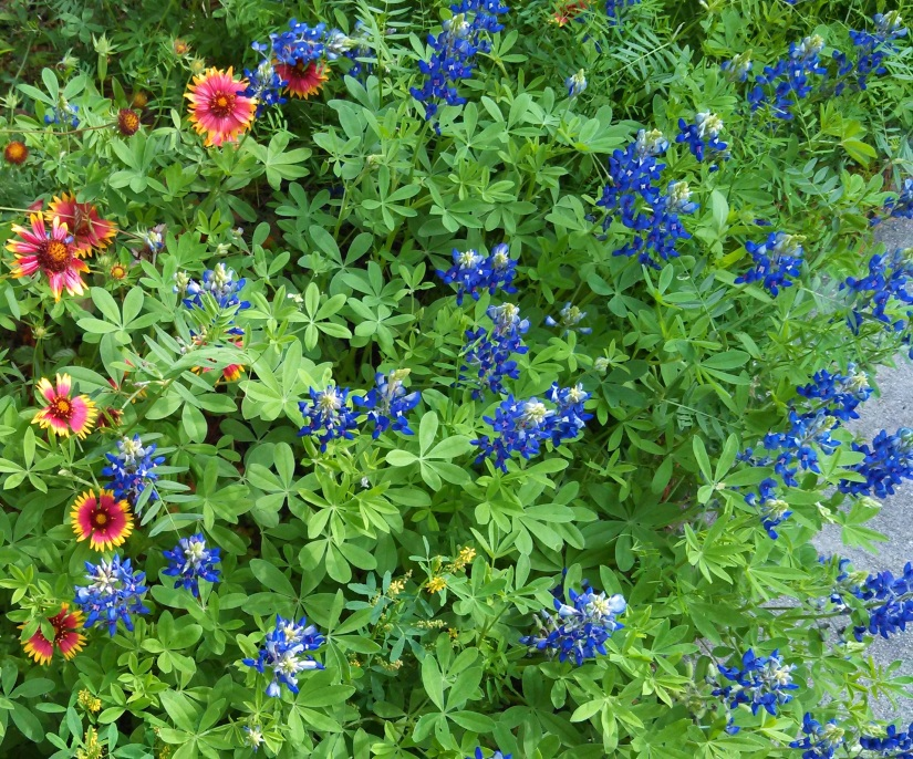 Wildflowers…Now's the time to plant