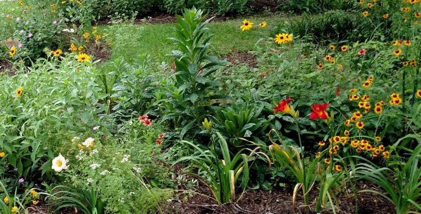 Top 10 Mistakes Gardeners Make