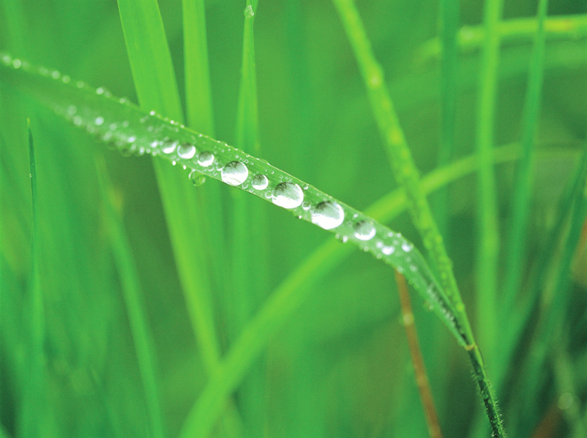 Watering lawns in fall andwinter